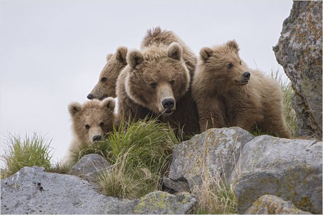 TERRE DES OURS - photo du film 2 - Go with the Blog