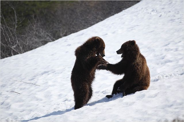 TERRE DES OURS - photo du film 4 - Go with the Blog