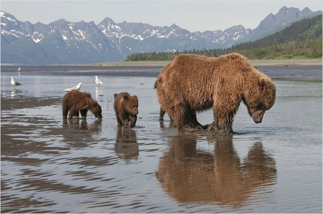 GRIZZLY - go with the blog - image du film
