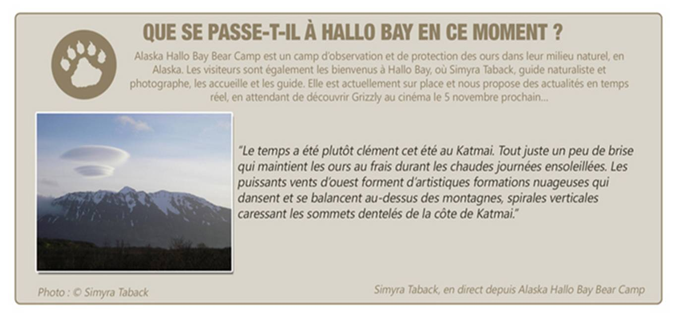 GRIZZLY - Info Hallo Bay Alaska - Go with the Blog