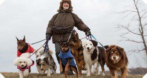 LA NOUVELLE VIE DE PAUL SNEIJDER : quitter cette vie de chien
