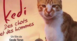 KEDI – DES CHATS ET DES HOMMES : ronronner au cinéma